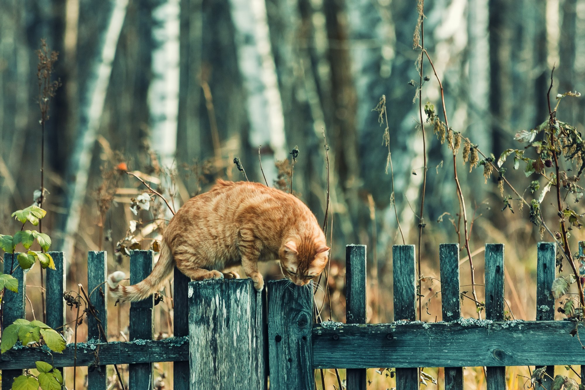Mispoes Zo Houd Je Katten Uit Je Tuin Rtl Nieuws