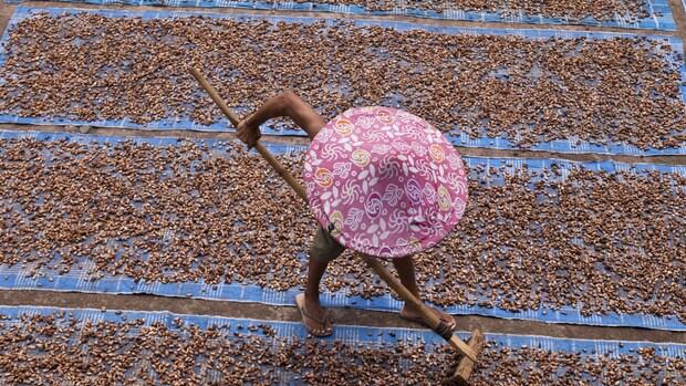 Duurzame cacao-industrie nog ver weg: 'Zelfs wetgeving werkt tegen'