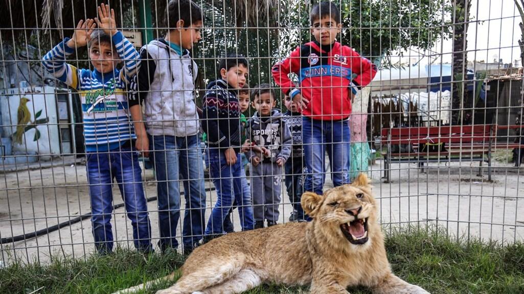 De leeuw zou zonder klauwen beter kunnen spelen met kinderen