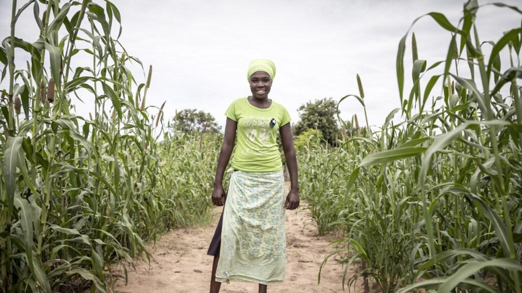 Mayo is moeder van een kind. Ze werkt op de boerderij in Zimbabwe. Het land heeft te kampen met steeds meer droogte. Maar dit gewas kan daar tegen.