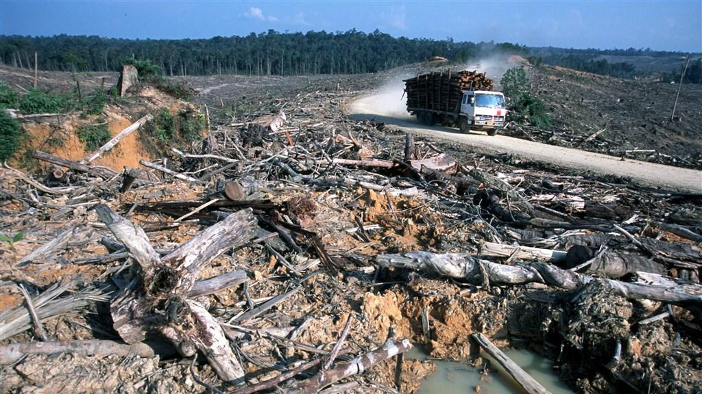 Ontbossing in Indonesië voor de productie van palmolie dat in veel Nederlandse producten zit.