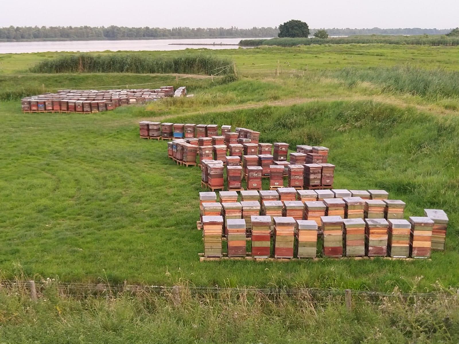 Bijenoverschot Dreigt Veel Te Veel Bijenkasten Bij De