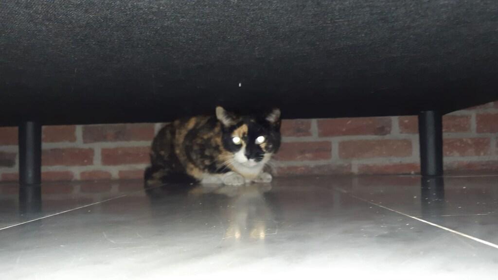Vlekkie kroop onder het bed toen ze weer thuis was.