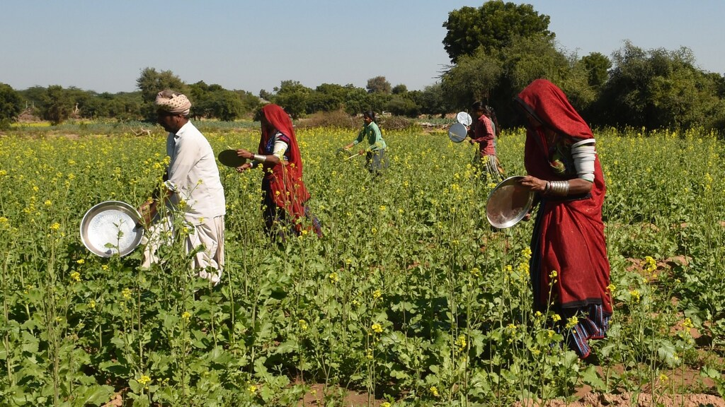 Dorpelingen in India slaan op deksels om sprinkhanen te verjagen.