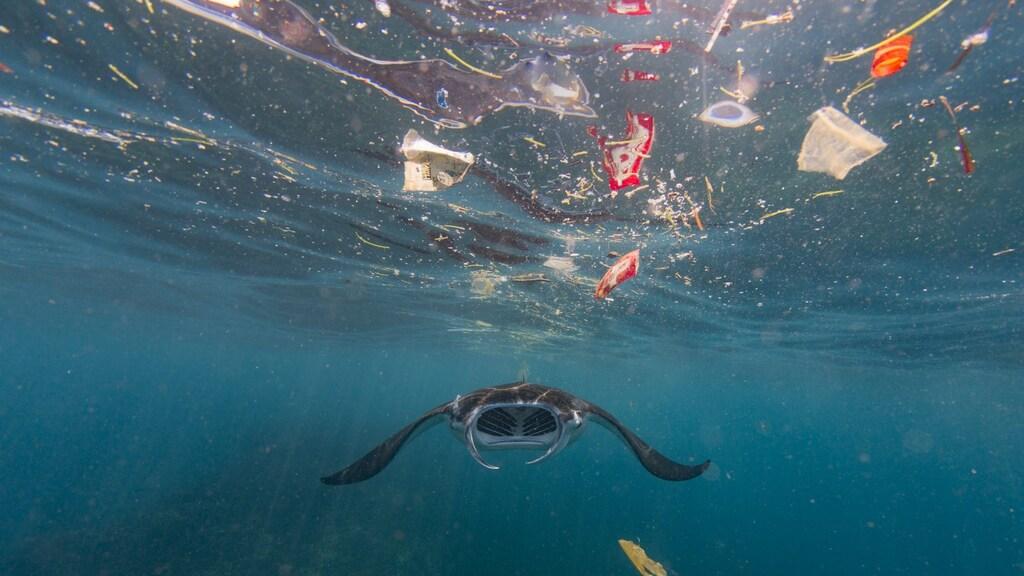 Veel plastic komt in zee terecht