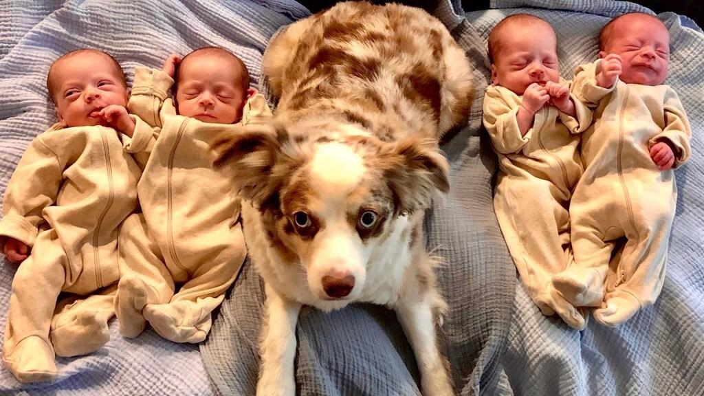 Harrison, Hardy, Henry, Hudson en hun hond Zeke.