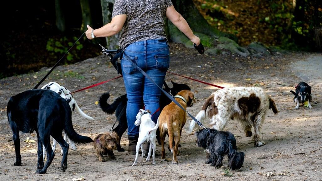 Een hondenuitlaatservice in Bilthoven.
