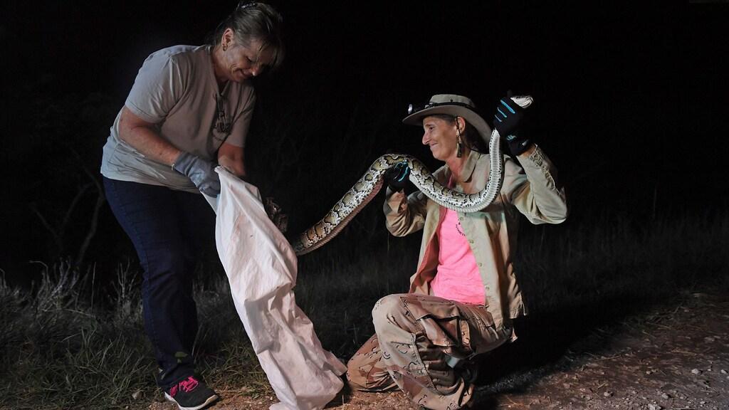 Pythonjager Donna Kalil