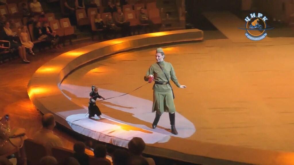 In tegenstelling tot bij ons maken dieren in Russische circussen nog altijd deel uit van de show.