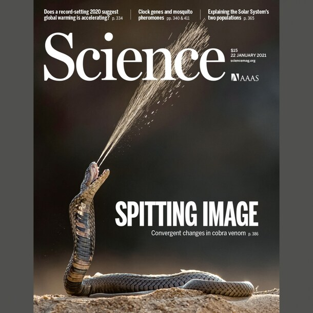 De cover van Science.