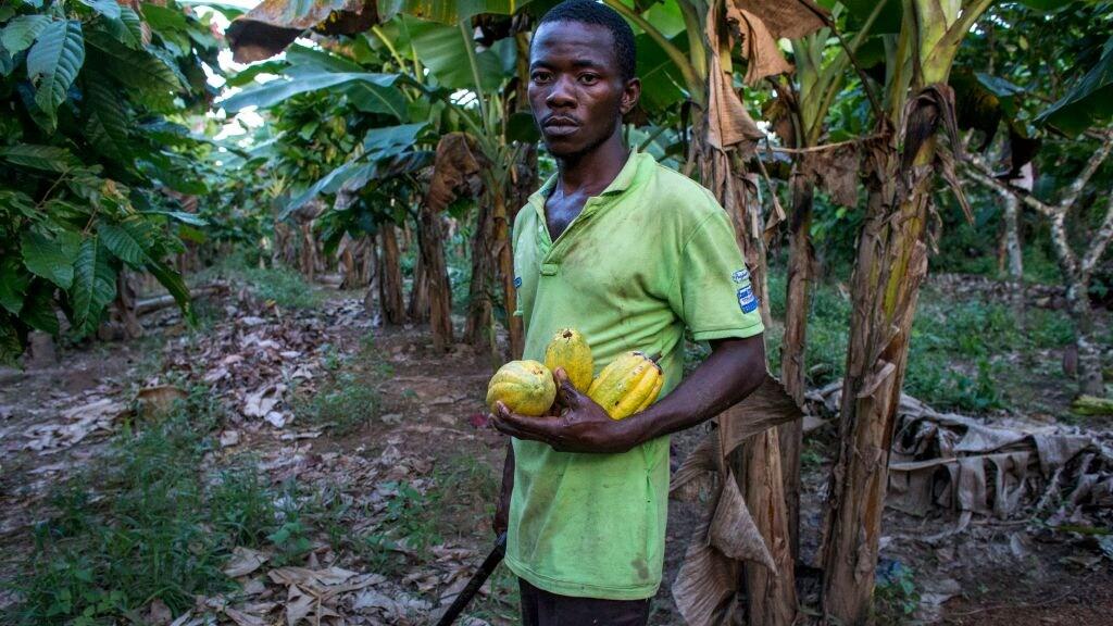 Een cacaoboer in Ivoorkust.