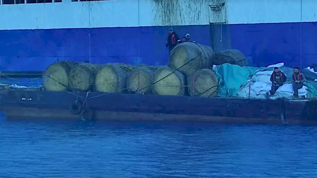 Er worden hooibalen voor de beesten naar het schip gebracht