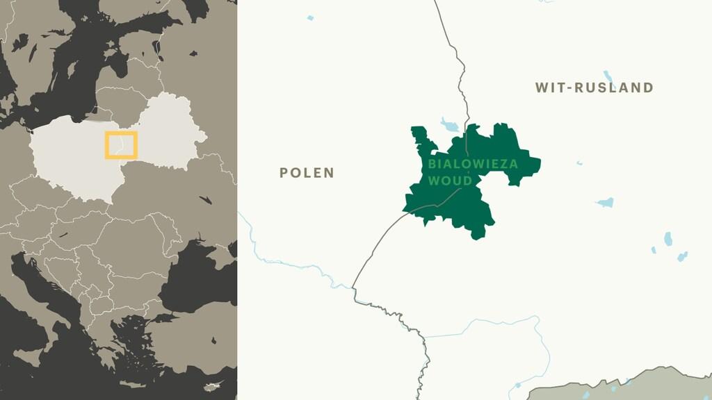 Białowieża is ongeveer even groot als de provincie Utrecht.