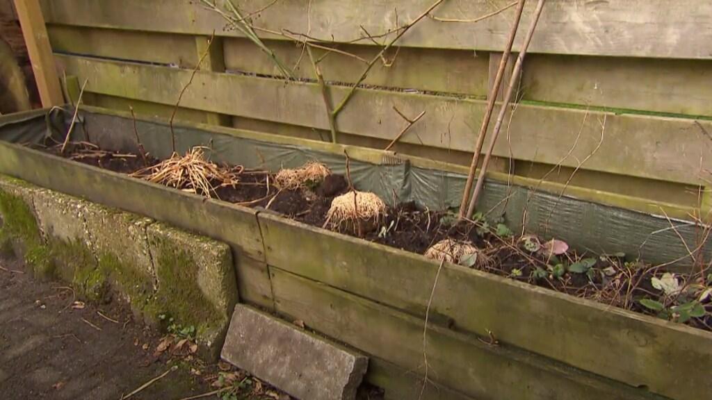 Voor: de kruiden en aardbeien die de familie ooit zelf plantte...