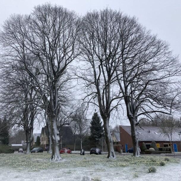 Sneeuw in Haren.