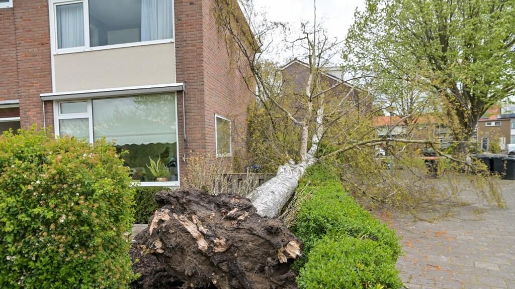 Een boom waaide om in een tuin in Dordrecht.
