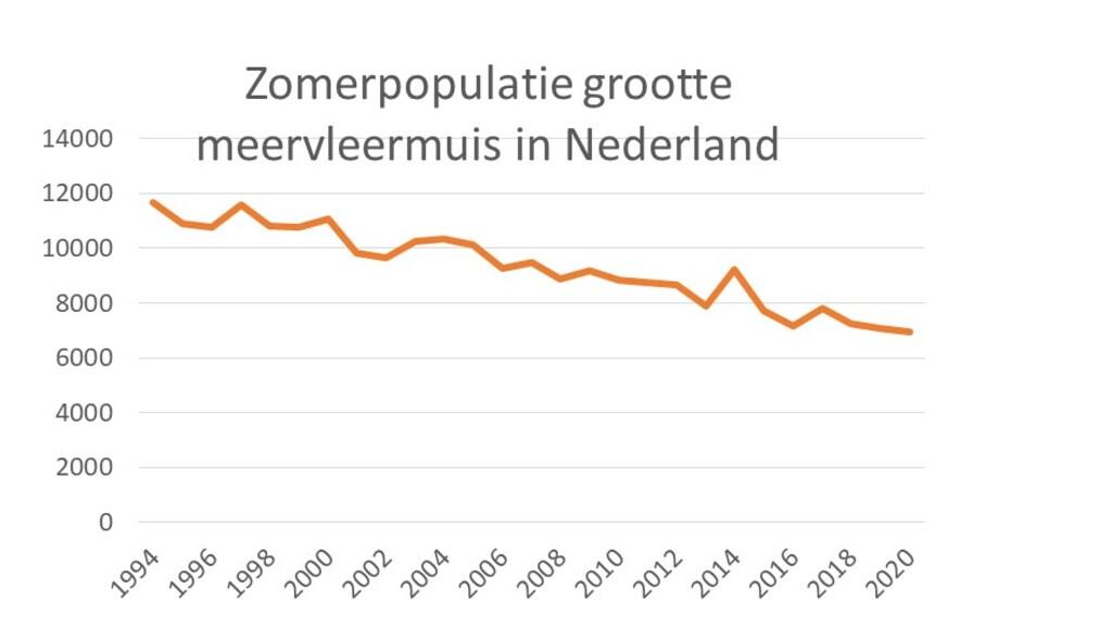 De zomerpopulatie van de meervleermuis in Nederland daalt snel.