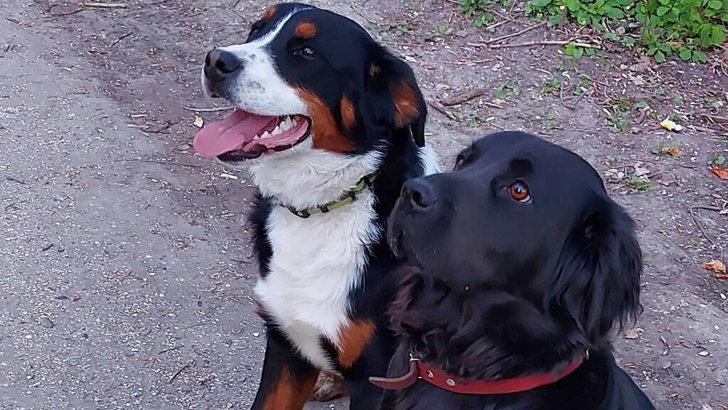 Behalve acht kinderen, zijn er ook nog twee honden.