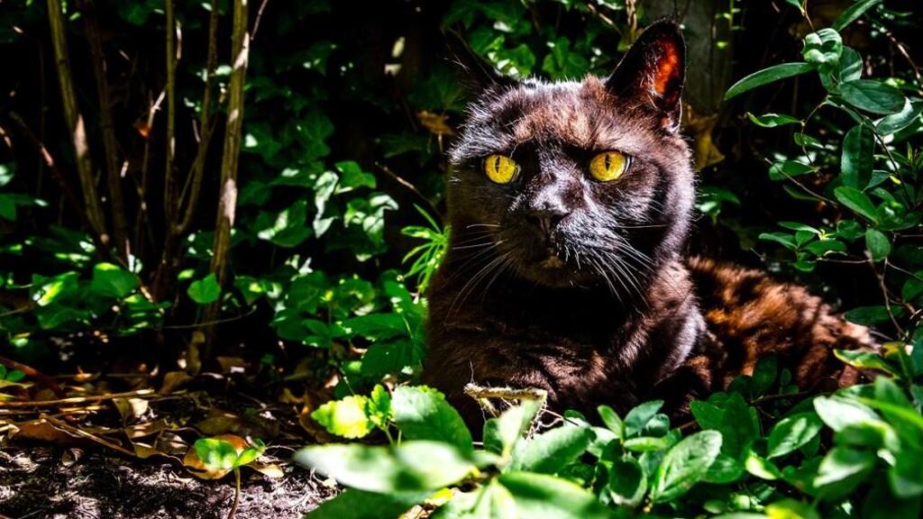 Een kat zoekt de schaduw op.
