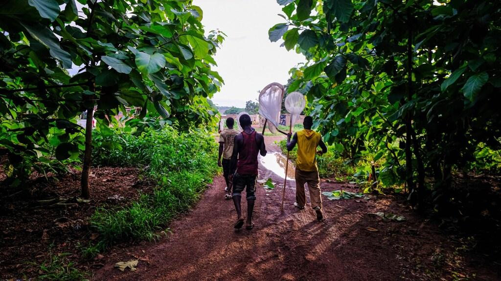 Malariamuggen vangen in Burkina Faso