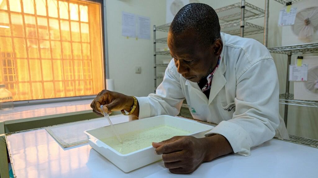 Een wetenschapper in Burkina Faso doet onderzoek naar de malariamug