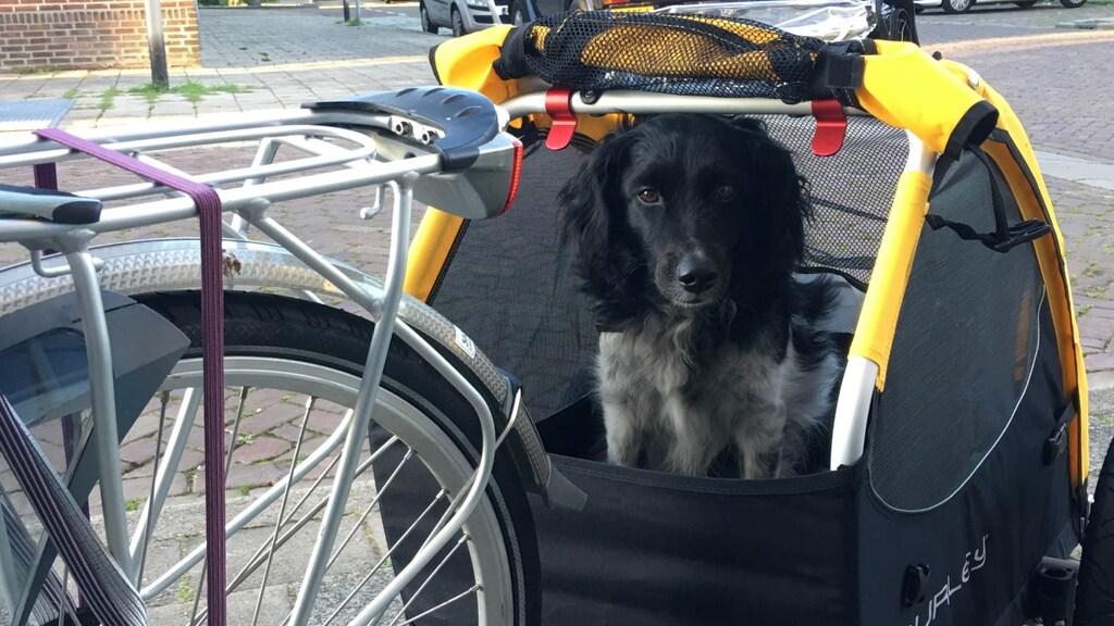Sita mee op avontuur, achterin de fietskar.