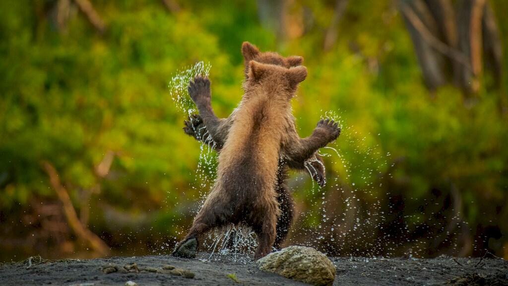 Laten we dansen