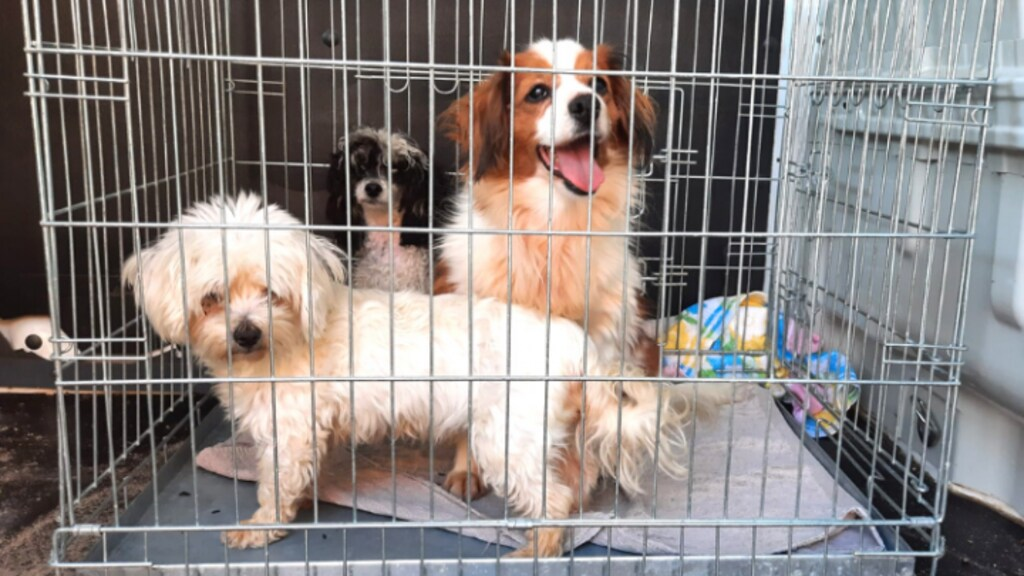 Drie honden zitten in een bench