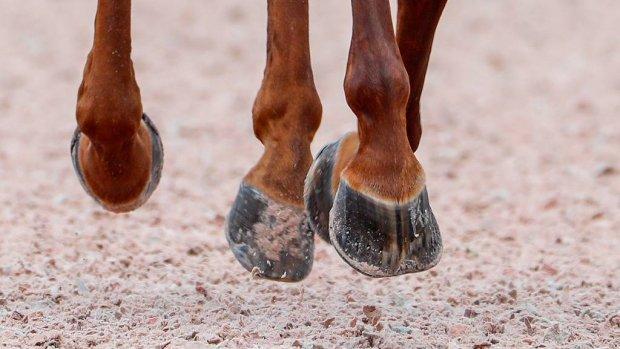 Tweede dode paard bij Wereldruiterspelen