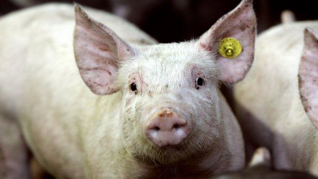 Miljoenenschade vleessector door Russisch importverbod