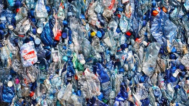 Deze plastic-etende bacterie kan recyclen voorgoed veranderen