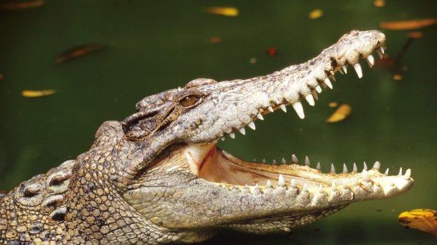 Zoektocht naar schipbreukelingen in mangrovebos vol krokodillen