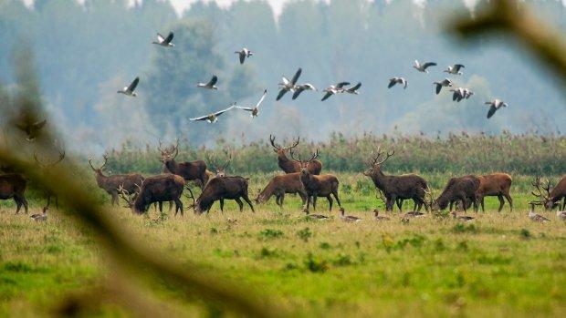 Bijna duizend edelherten worden afgeschoten, paarden verhuizen