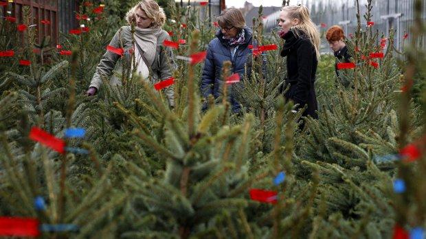 Editie Kerst Check: op zoek naar de mooiste kerstboom