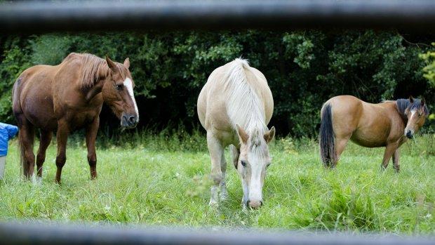 Petitie: landelijk politieteam voor opsporing paardenbeul