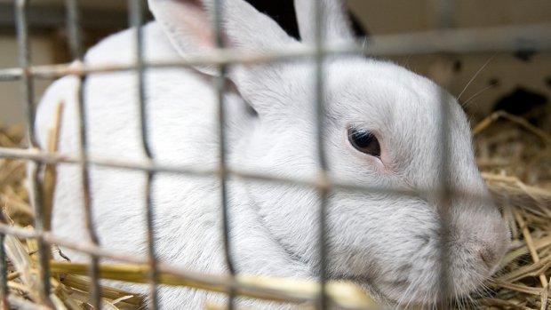 Dirk en Dekamarkt verkopen geen konijnenvlees meer