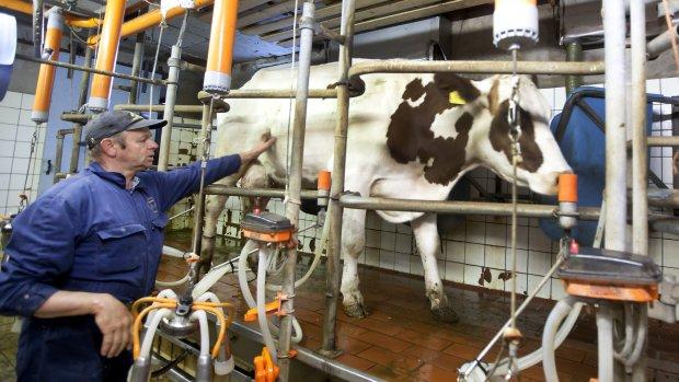 Kassa voor Nederlandse boeren: hoogste inkomen van de eeuw