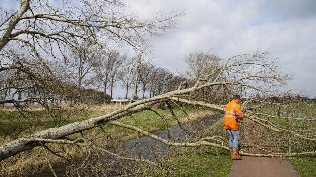 Meeste meldingen stormschade in Gelderland