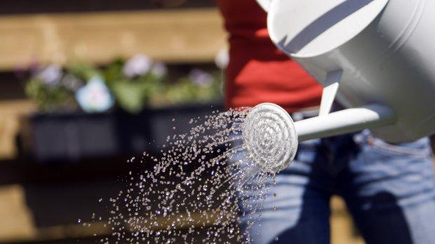Gemeente vraagt hulp inwoners: geef bomen water