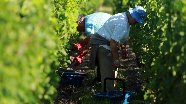 Bordeaux verliest macht als exclusieve wijnstreek