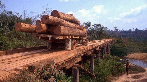 Grote bedrijven zetten zich in tegen ontbossing