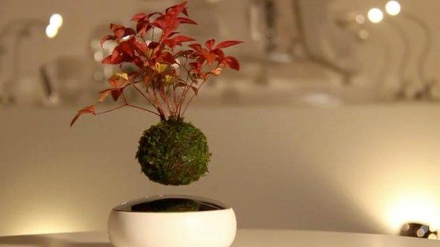 Dit bonsaiboompje zweeft boven je bureau