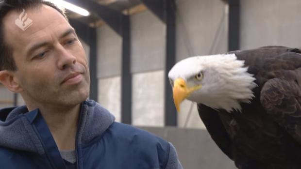 Politie traint roofvogels om drones neer te halen