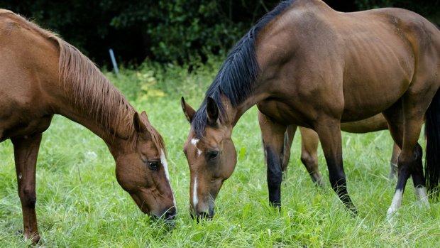 Dierenartsen: mishandeling paarden is massahysterie