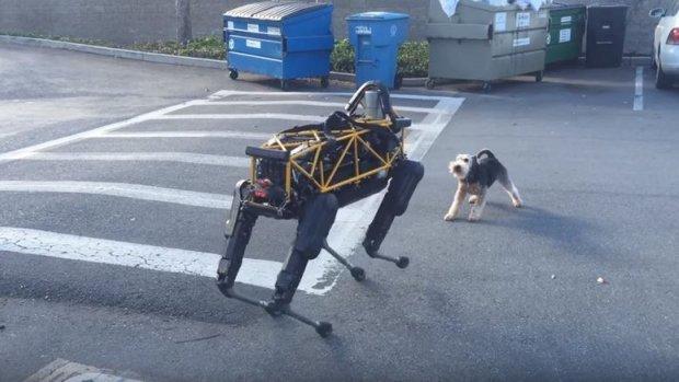 Woef, hond speelt met robotvriendje