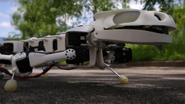 Robotsalamander helpt bij ontwikkeling van rugprotheses