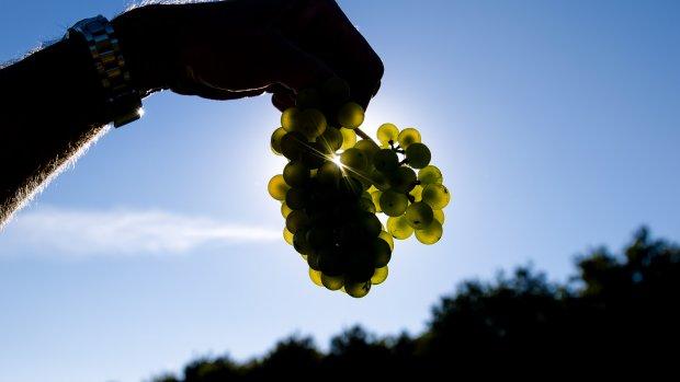 Druiven in Japan voor recordbedrag geveild