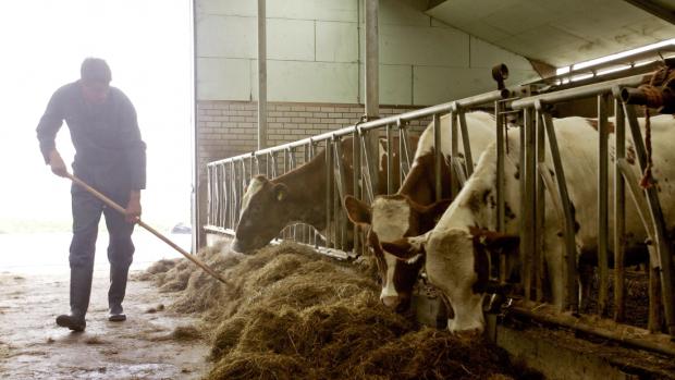 Vakantietrend: zonder smartphone op de boerderij