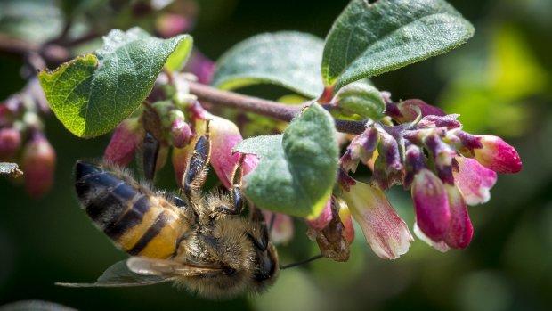 'Landbouw kan prima zonder fipronil en bijengif'