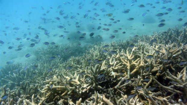 Grootste koraalsterfte ooit bij Great Barrier Reef